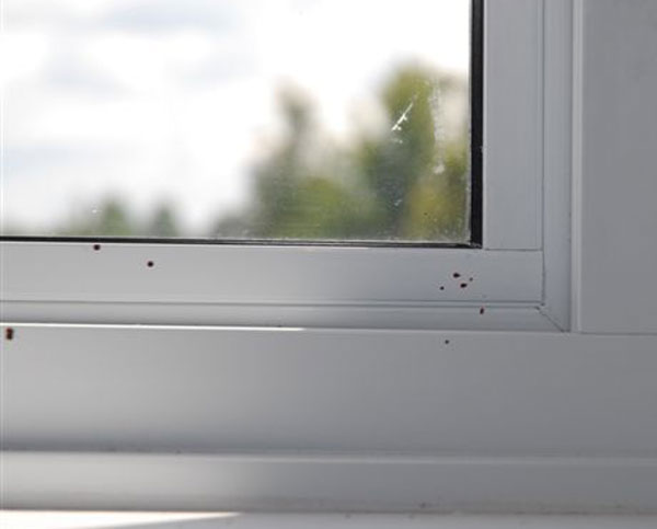 Bloodstain Example - Fly Spot